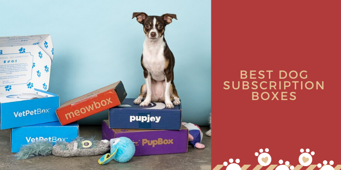 10 Best Dog Subscription Boxes